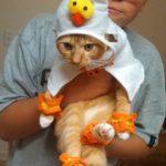 gatti halloween (2)