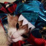 gatti halloween (6)