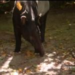 pechino express tapiro