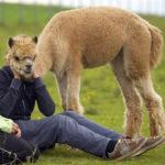 illusioni ottiche con gli animali