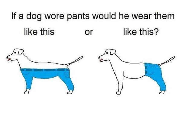 dog pants meme pantaloni cane - 1