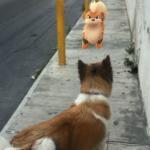 pokemon go animali - 1