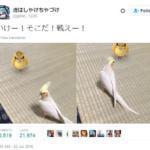 pokemon go animali - 2