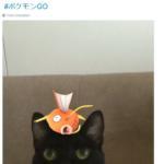 pokemon go animali - 3