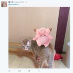 pokemon go animali - 5