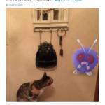 pokemon go animali - 8