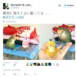 pokemon go animali - 9