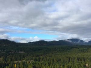 foresta vicino a Seattle