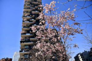 primavera milano