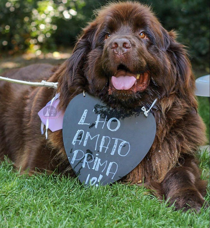 Nadine, il cane di Paola Turani e Riccardo Serpellini