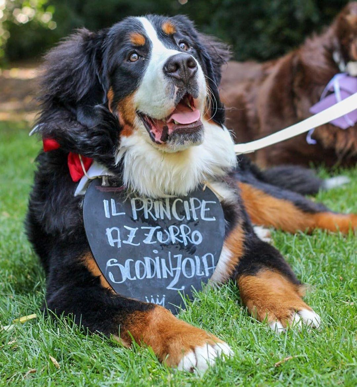 Gnomo, il cane di Paola Turani e Riccardo Serpella