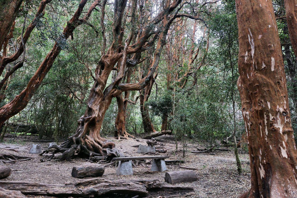Bosque de los Arrayanes - Bariloche