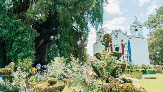 Albero di Tule Oaxaca