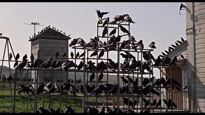 Uccelli appollaiati