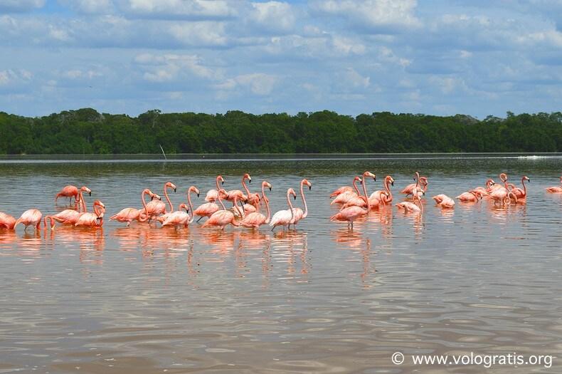 cosa vedere nello yucatan celestun fenicotteri rosa