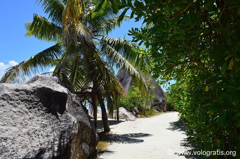 foto seychelles palme