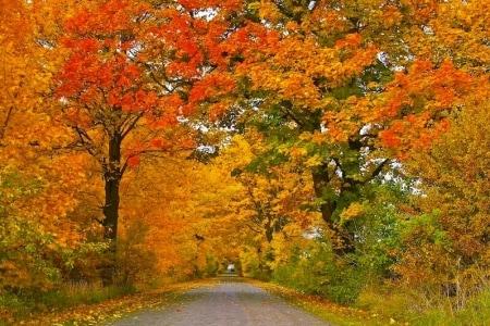 foliage luoghi dove ammirarlo