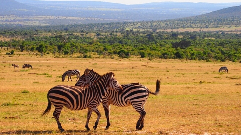 voli per il kenya