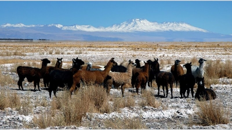 concorso per vincere un viaggio in Cile