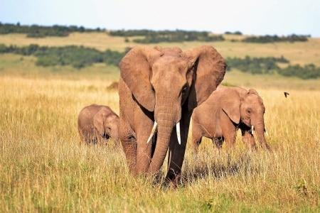 concorso per vincere un viaggio in kenya