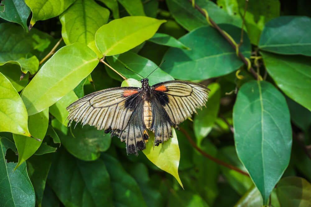 berkeley castle casa delle farfalle