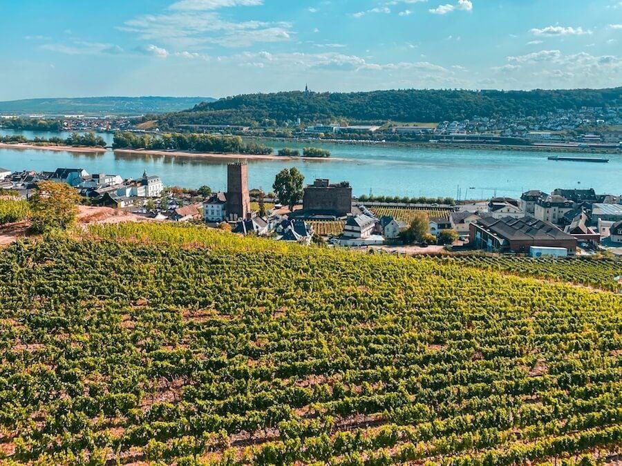 rüdesheim am rhein dall'alto