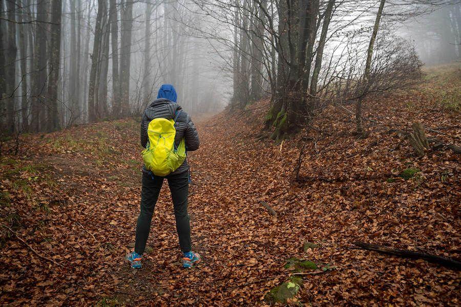 foreste casentinesi cammino di dante
