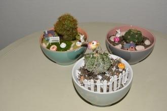 Giardino in tazza con cactus