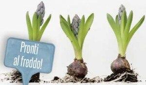 bulbi-piantare