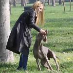 Michelle Hunziker, tra cani, figlie e la certezza del non essere incinta - Real Paparazzi